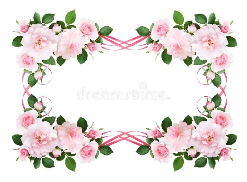 Rosa färger steg blommor och siden- vinkade band i en blom- ram stock illustrationer