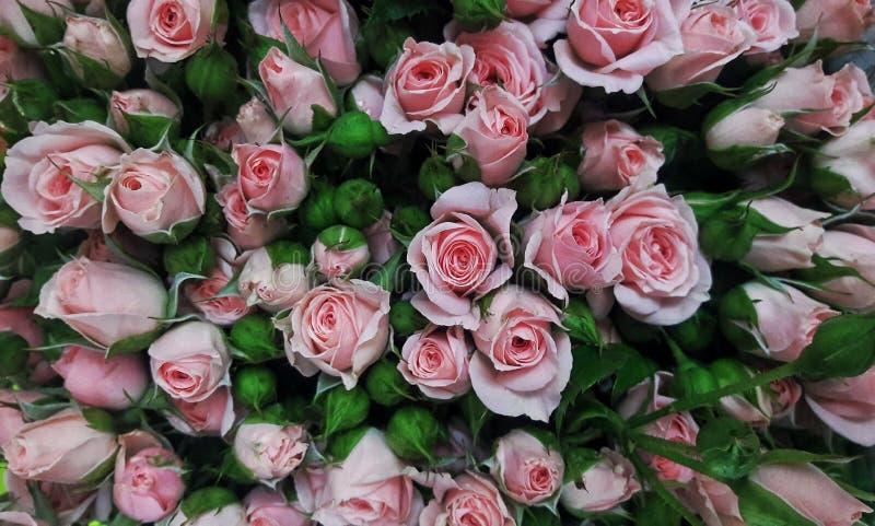 Rosa färger steg närbilden, bukett arkivfoto