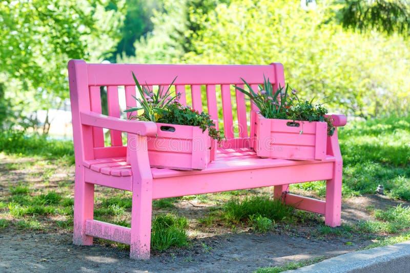 Rosa färger tar av planen i gräsplanen parkerar royaltyfri foto