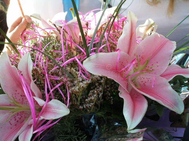Rosa färger till vita lutningliljor arkivbilder