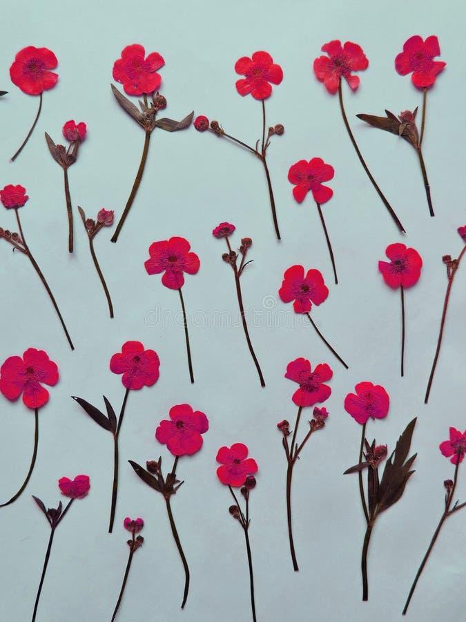Rosa färger torkade blommor royaltyfri foto