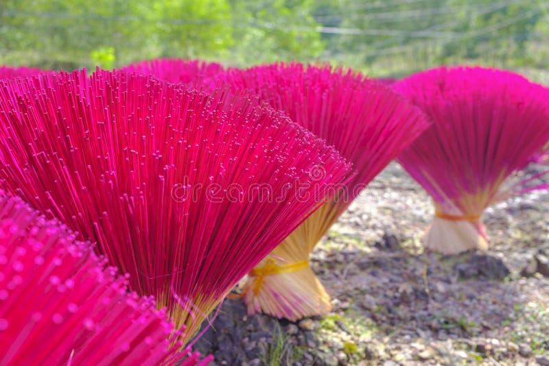 Rosa färger vädrade pinnar i en sol fotografering för bildbyråer