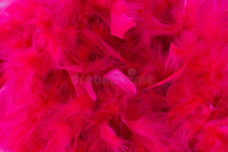 Rosa färgfjäder royaltyfria foton