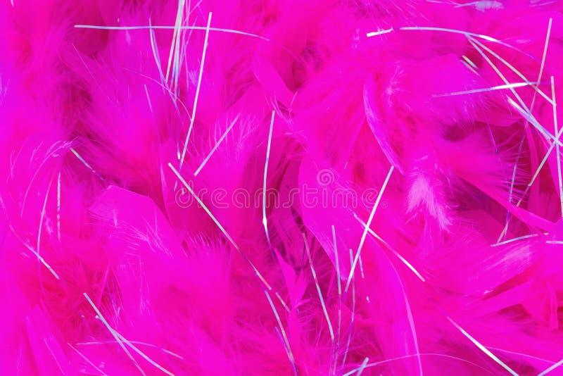 Rosa färgfjäder arkivfoto
