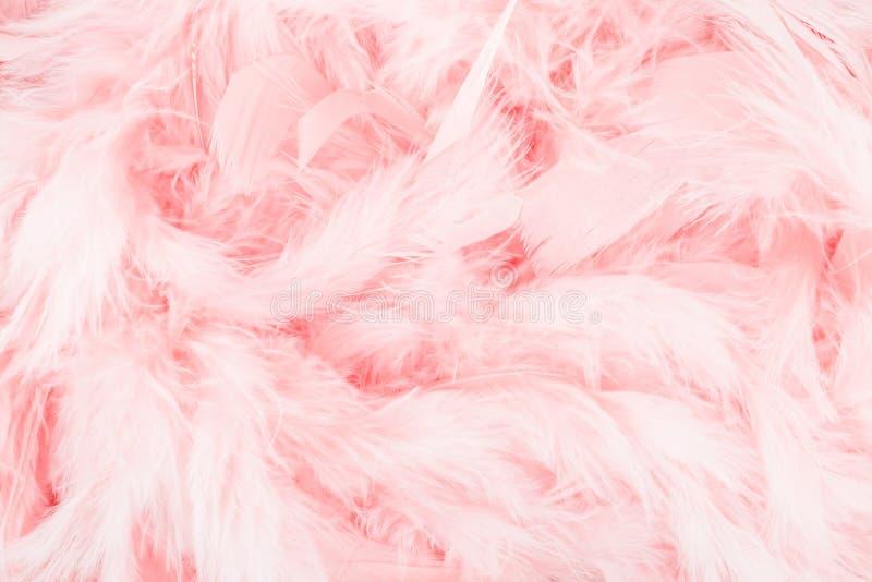 Rosa färgfjäderbakgrund arkivbild