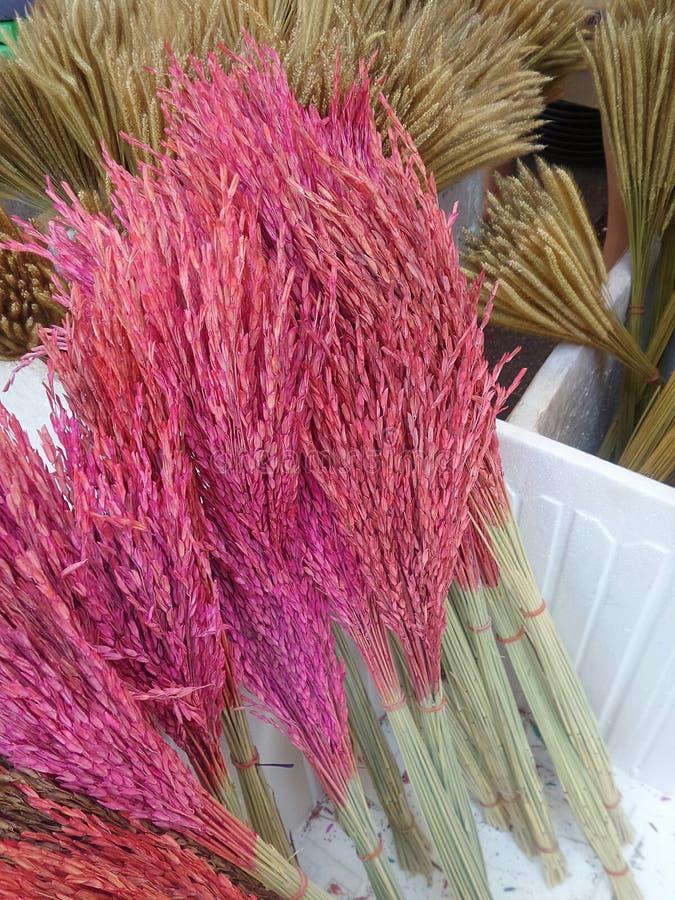 rosa färggräsblomma royaltyfri foto