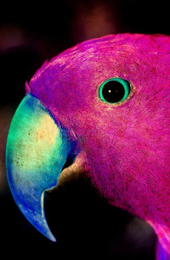 Download Rosa färgpapegoja fotografering för bildbyråer. Bild av konstigt - 78729413