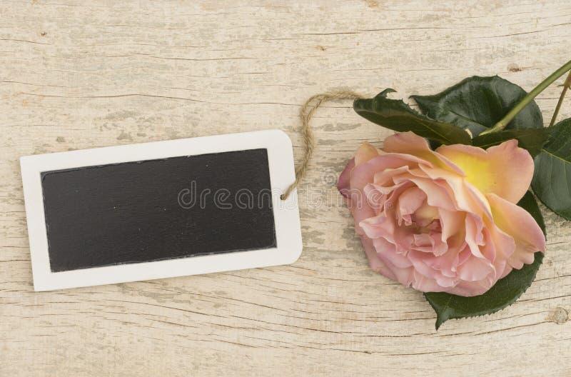 Rosa färgros med den tomma lilla minnestavlan arkivfoto