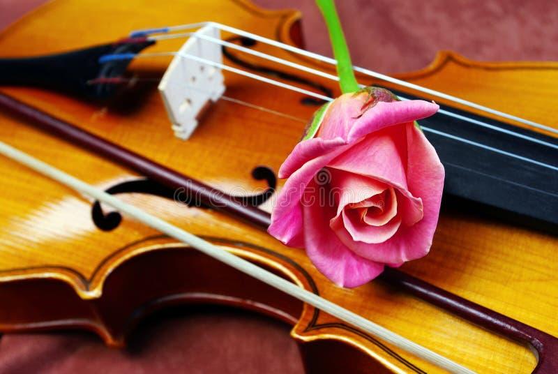 Rosa färgros och fiolnärbild royaltyfri foto