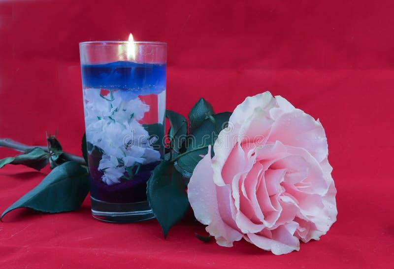 Rosa färgros och stearinljus på röd sammetbakgrund royaltyfria bilder