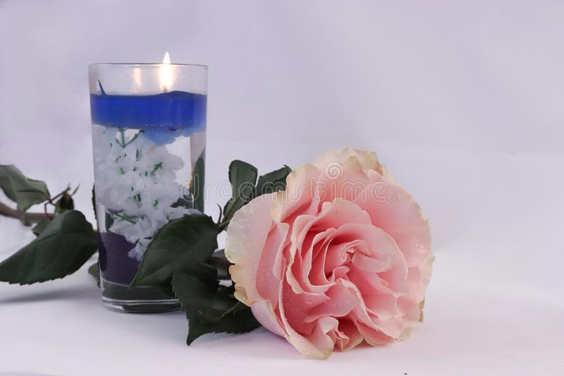 Rosa färgros och stearinljus på vit bakgrund arkivbilder