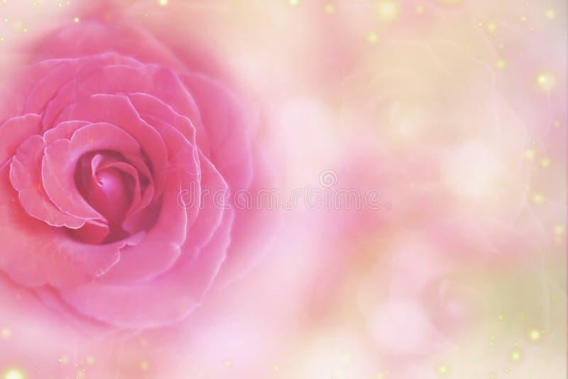 rosa färgros på en mjuk rosa bokehbakgrund för Valentine& x27; s-dag arkivfoto