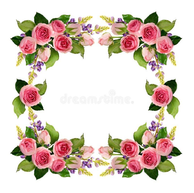 Rosa färgrosen blommar och knoppramen stock illustrationer