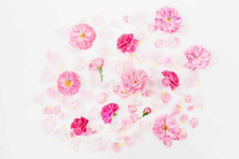 Rosa färgrosen blommar på vit bakgrund Lekmanna- lägenhet, bästa sikt Textur för blommamodell royaltyfria bilder