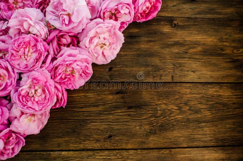 Rosa färgrosen blommar på wood bakgrund Ställe för text, bästa sikt arkivfoton