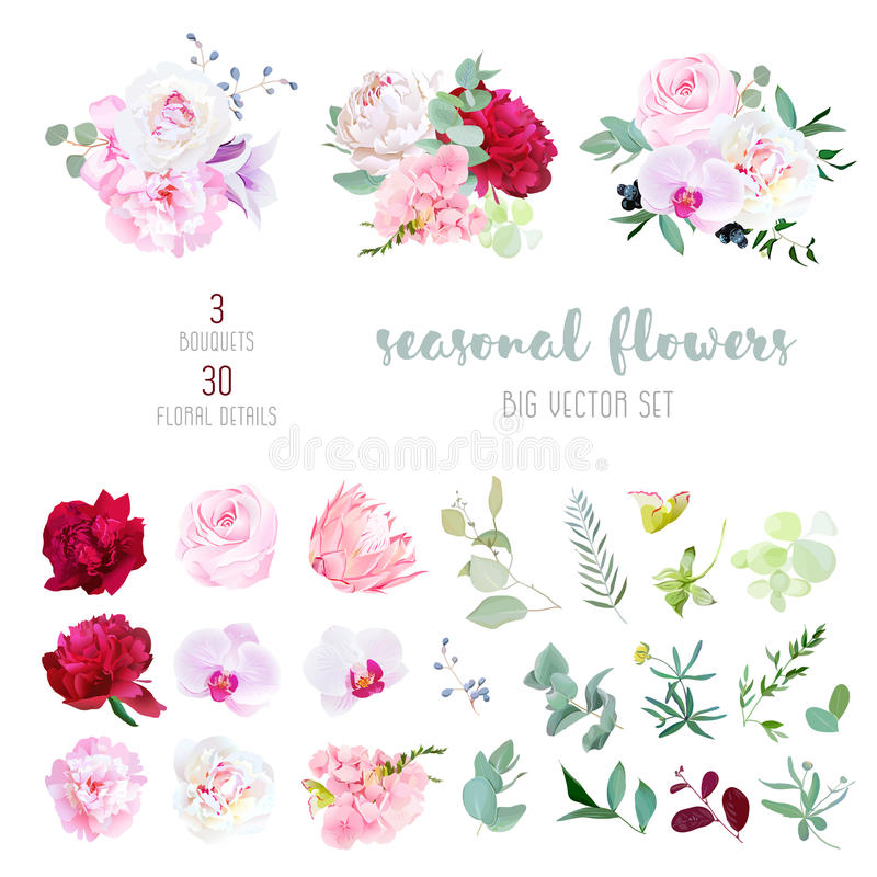 Rosa färgrosen, vit och burgundy den röda pionen, proteaen, den violetta orkidén, vanliga hortensian, klockblomma blommar royaltyfri illustrationer