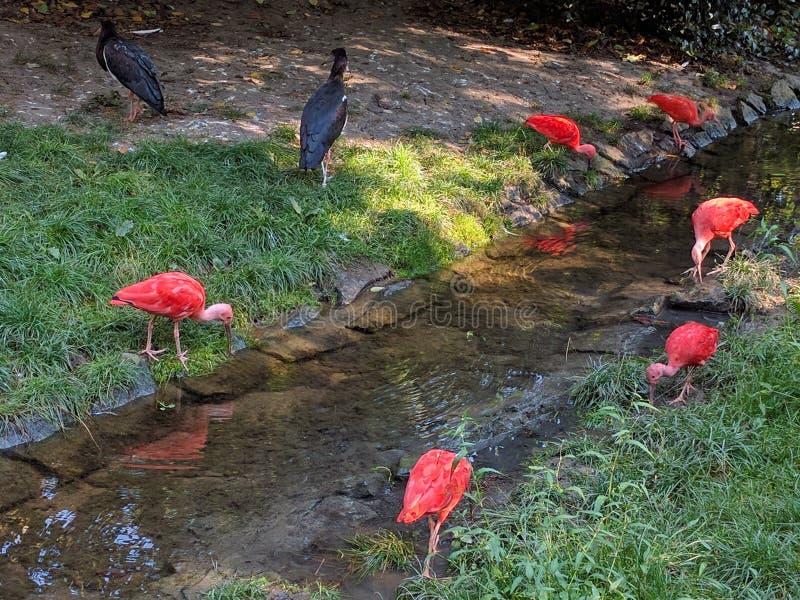 Rosa fåglar royaltyfri fotografi