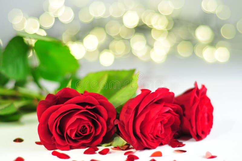 Rosa för tre rosor rubiginosa i rad på den vita bordduken mellan gula och blåa ljus för hjärtor, royaltyfria foton