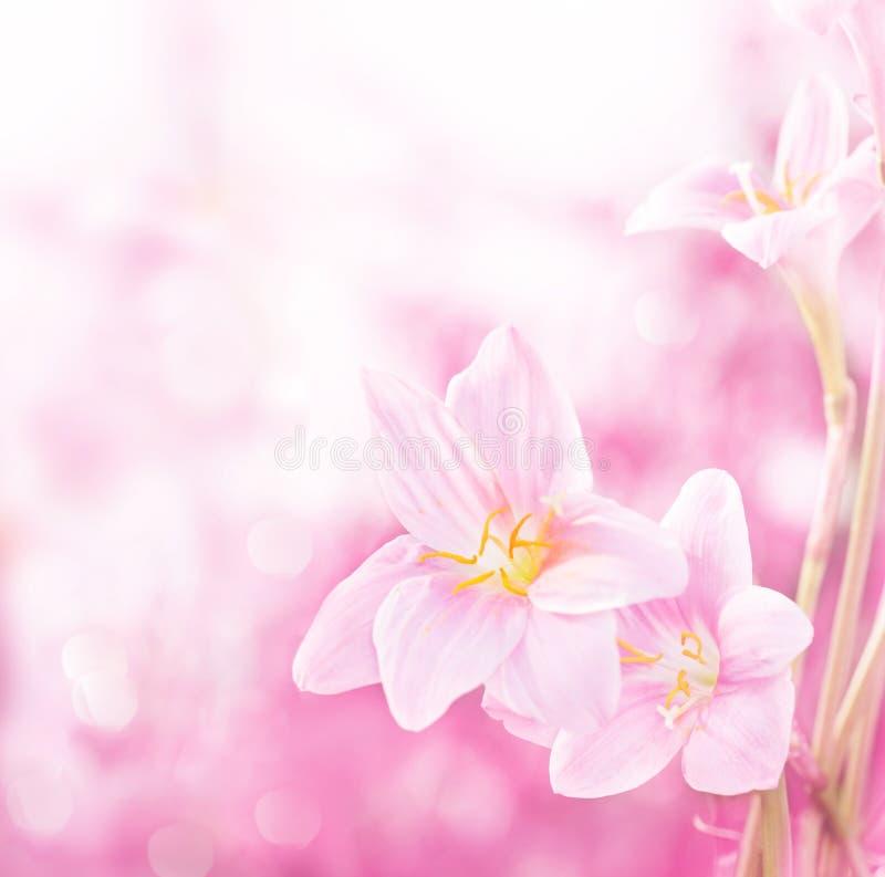 rosa fjäder för blommor fotografering för bildbyråer