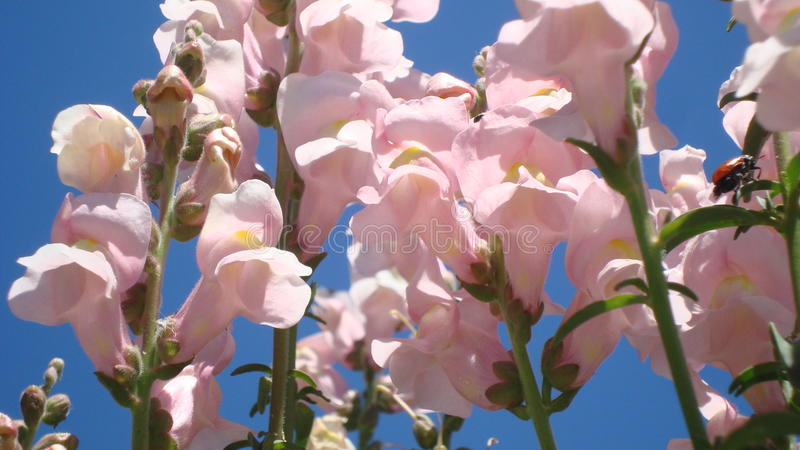 rosa fjäder för blommor arkivfoto