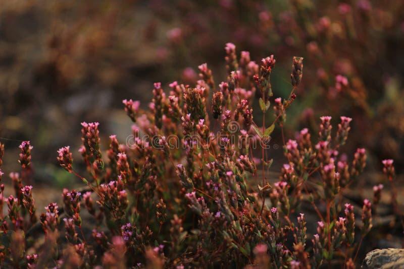 Rosa flöde till naturen arkivfoton