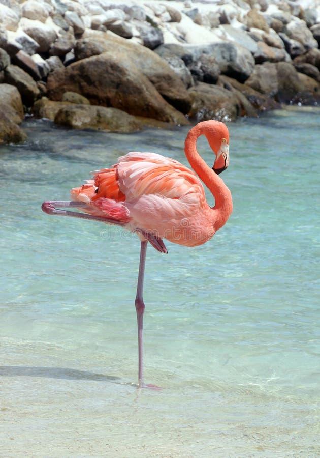 Rosa Flamingo lizenzfreies stockbild