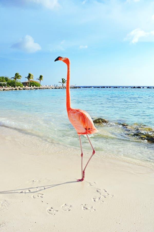 What Time Is It In Aruba Island