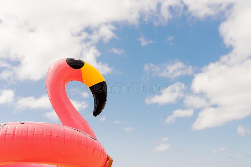 Rosa Flamingo auf Strand stockfotos