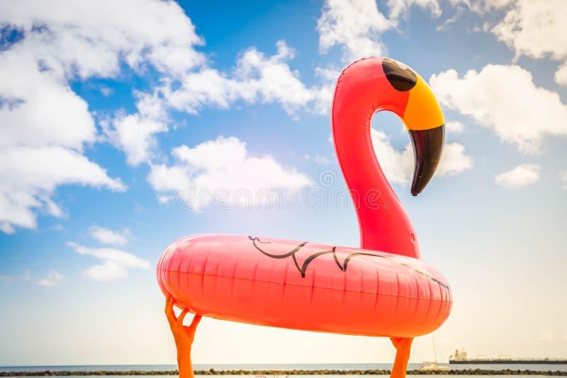Rosa Flamingo auf Strand stockfotografie