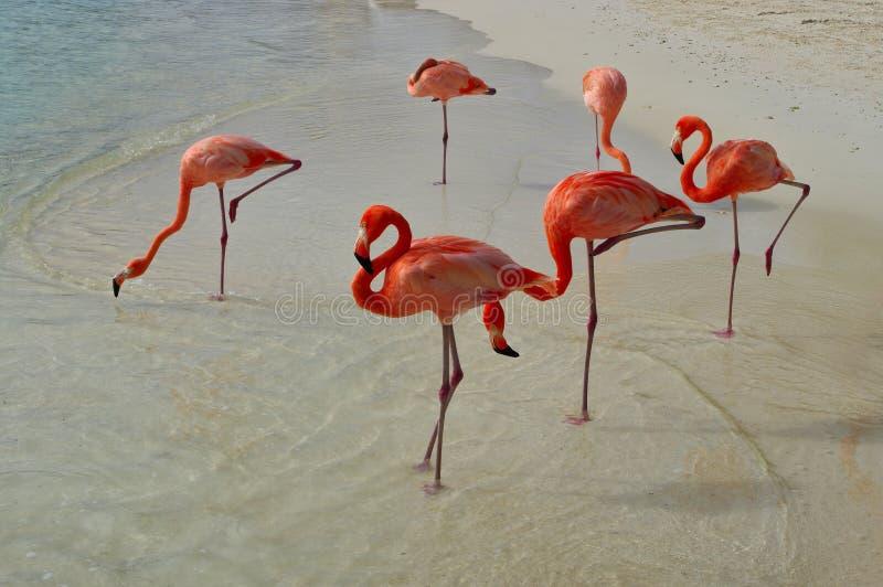 Rosa flamingo på stranden royaltyfri bild