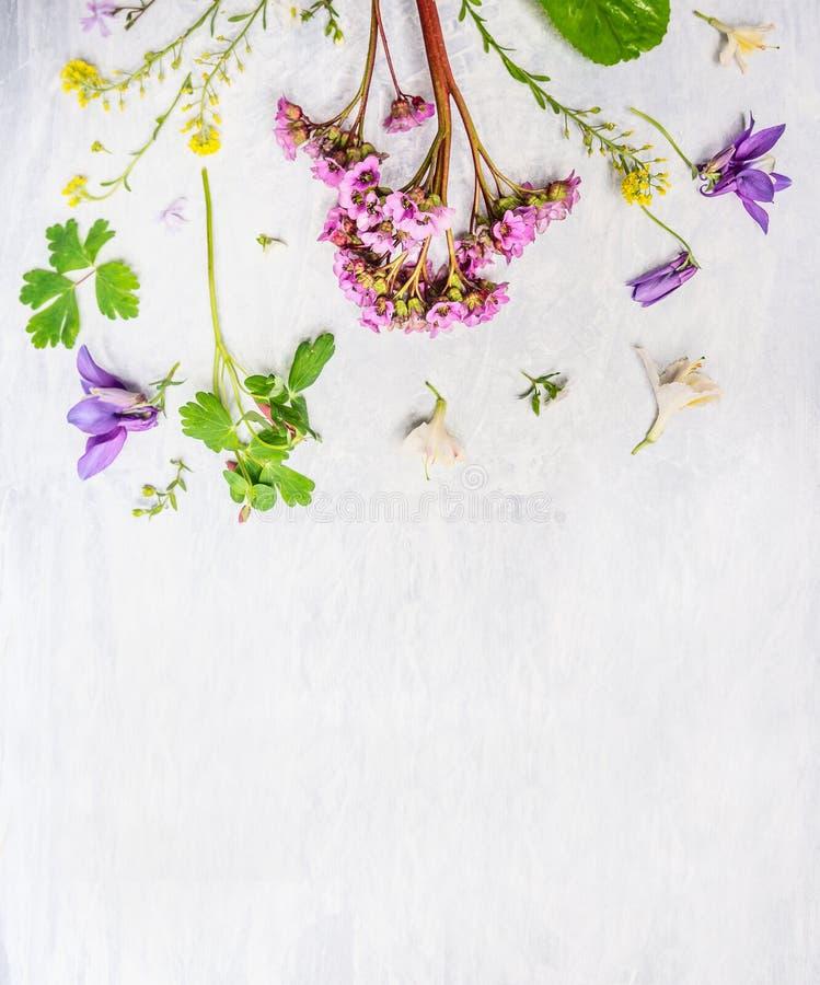 Rosa, flores lilás e amarelas e plantas do jardim da mola ou do verão no fundo de madeira claro foto de stock