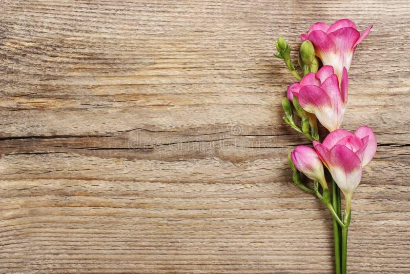 Rosa freesia blommar på trä royaltyfri foto