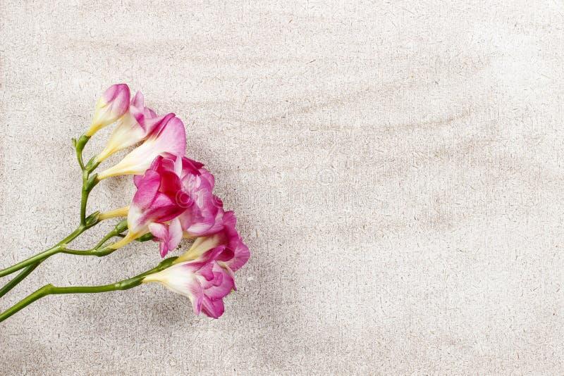 Rosa freesia blommar på träbakgrund arkivbilder