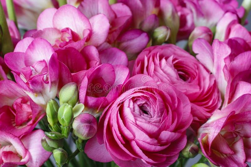 Rosa freesia- och persersmörblommablommor royaltyfria foton