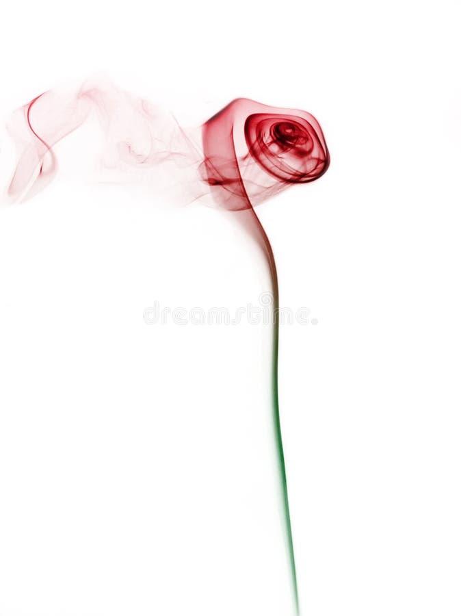 Rosa in fumo immagine stock libera da diritti