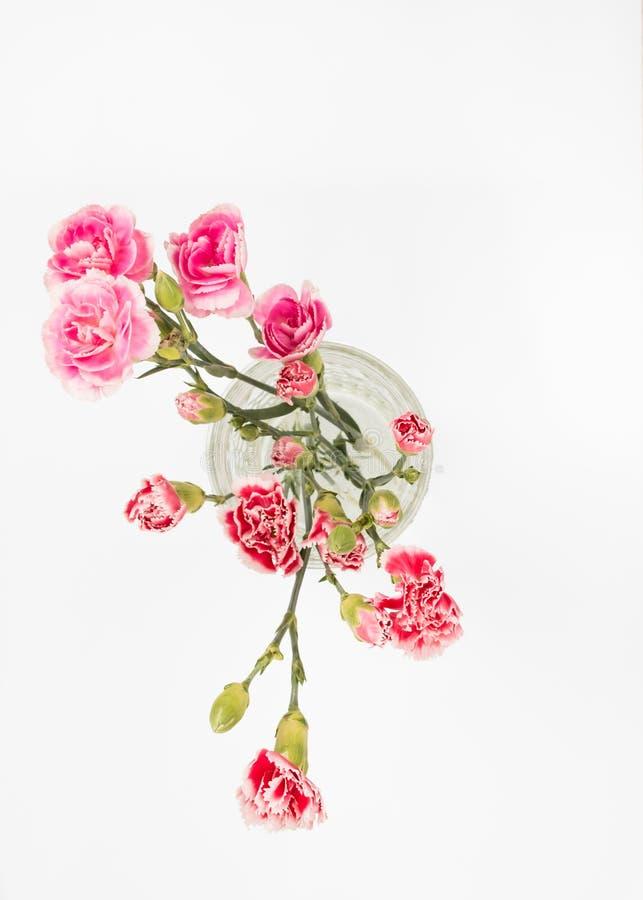 Rosa Gartennelken im Glas lizenzfreie stockfotografie