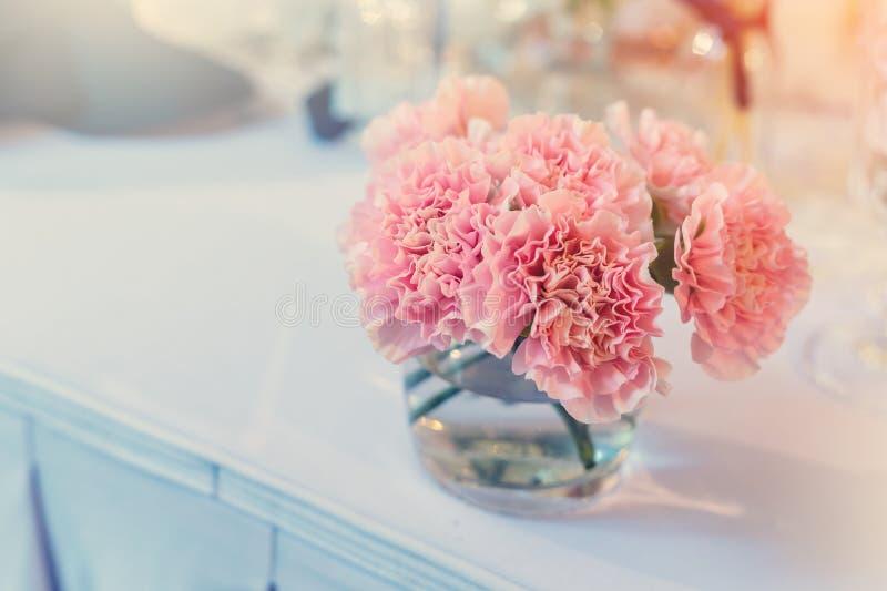 Rosa Gartennelkenblume lizenzfreie stockfotografie