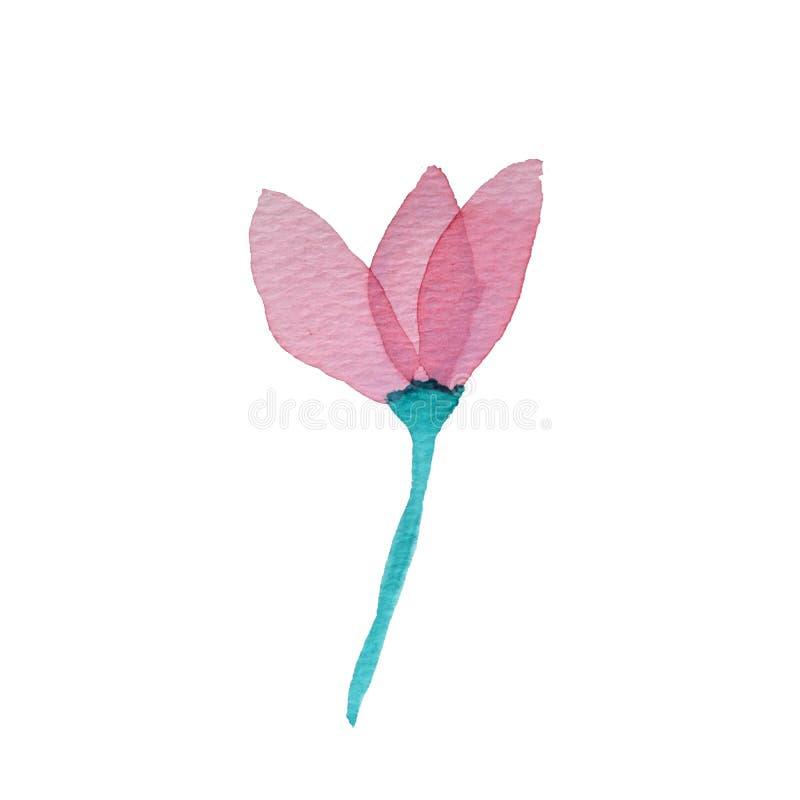 Rosa genomskinlig i lager rosa blomma för vattenfärg på vit bakgrund vektor illustrationer