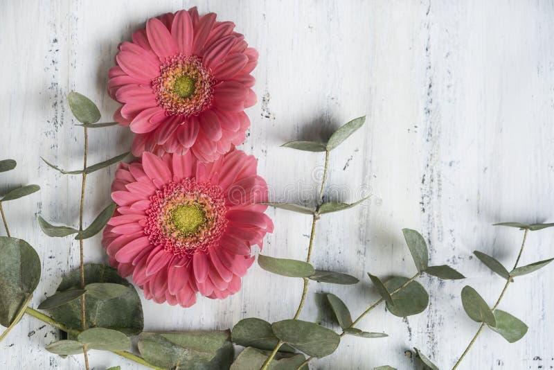 Rosa Gerberagänseblümchenblumen auf Holzoberfläche für Frauentagesgruß lizenzfreie stockfotografie