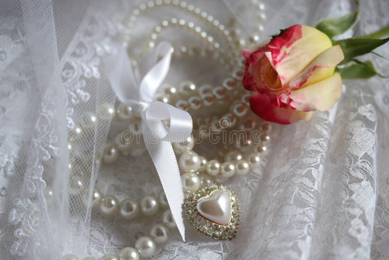 Rosa gialla fotografie stock libere da diritti