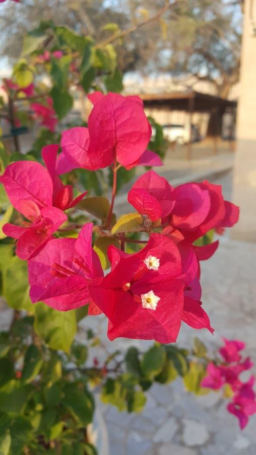 Rosa glänzende Blume lizenzfreies stockfoto