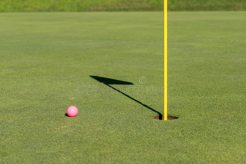 Rosa golfboll vid flaggan och hål på sättande gräsplan fotografering för bildbyråer