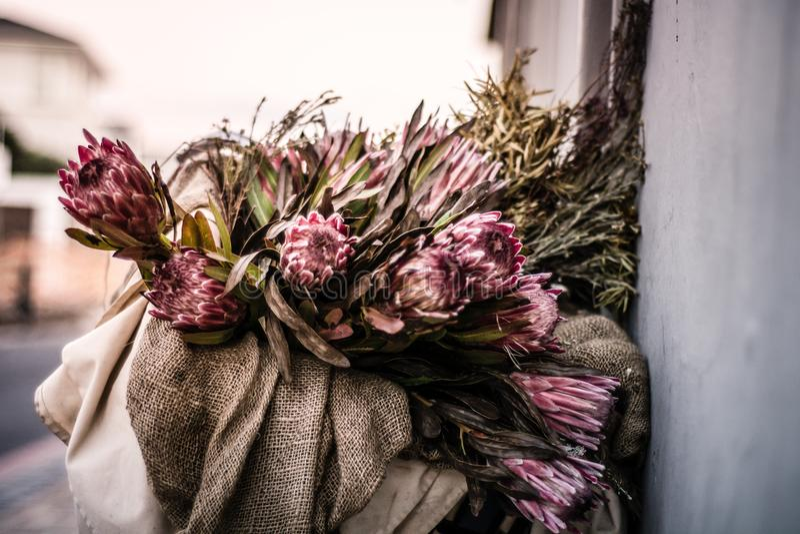 Rosa großer Protea in einem Korb nahe bei der Straße in Blouberg-Strang stockfotografie