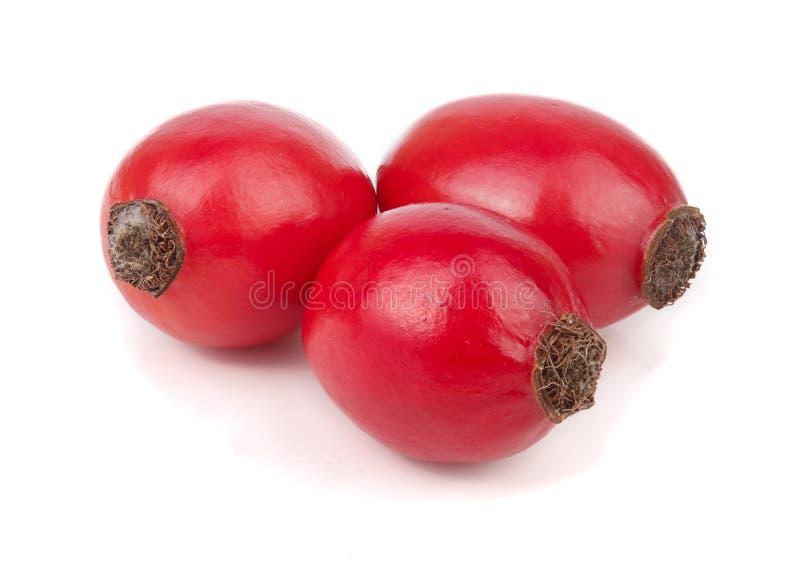 Rosa höftbär som isoleras på den vita bakgrundsmakroen royaltyfri fotografi