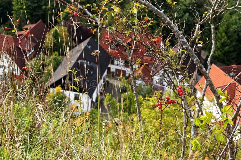 Rosa höfter och höga gräs ovanför hus royaltyfri fotografi