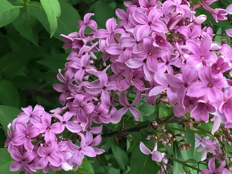 Rosa hübsche Blumen lizenzfreies stockbild