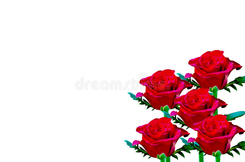 Rosa hermosa del rojo fotos de archivo