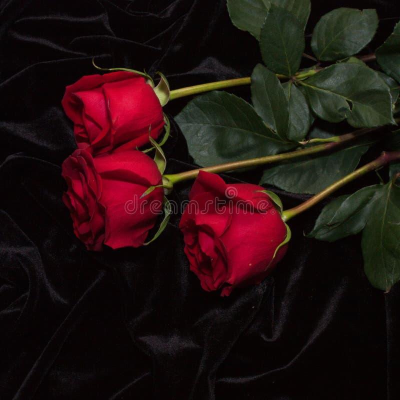 Rosa hermosa del rojo en el satén negro fotos de archivo