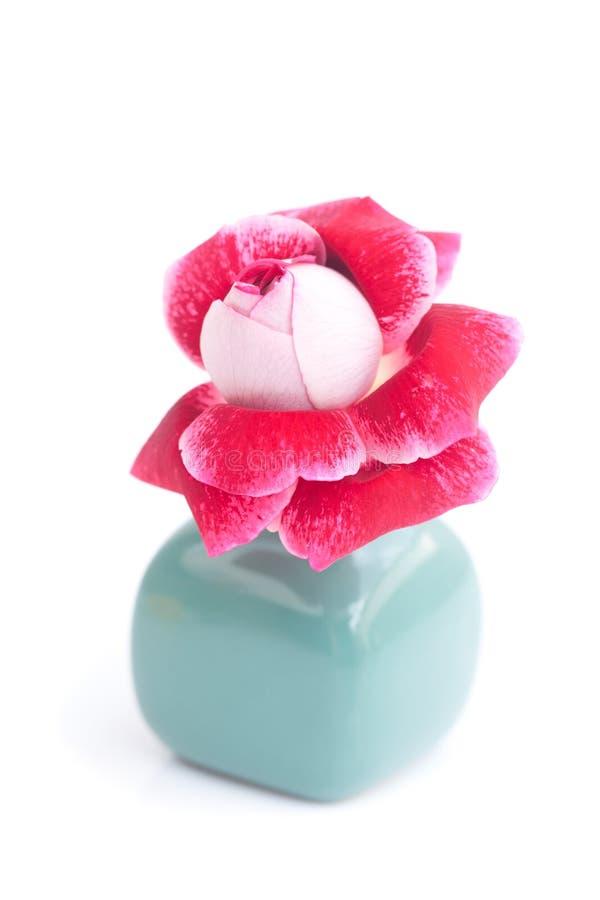 Rosa hermosa del rojo en un florero fotos de archivo libres de regalías