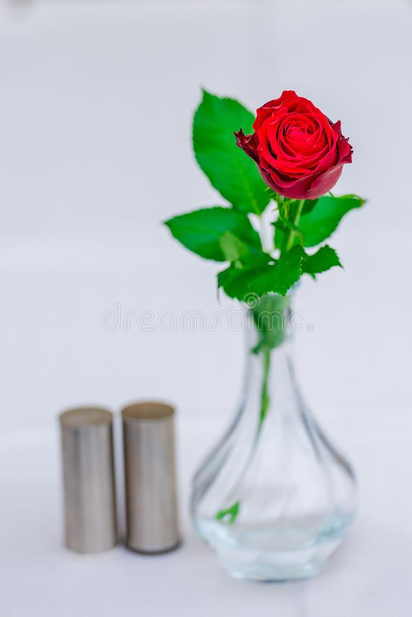 Rosa hermosa del rojo en un florero en una tabla en un café fotos de archivo
